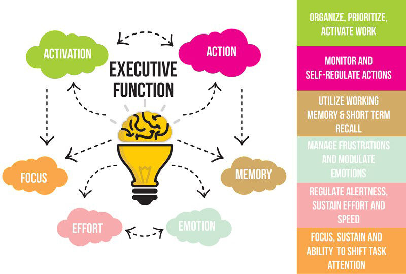 ExecutiveFunction-ewebster-1 copy
