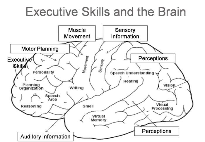 executive skills and the brain